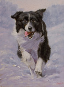 Border Collie Portrait II Print by John Silver