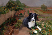 Collie Painting Framed Prints - Border Collie Portrait - The Gardeners Companion Framed Print by Enzie Shahmiri