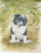 Border Collie Drawing Posters - Border Collie pup portrait II Poster by John Silver