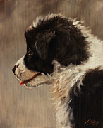 Dry Lake Paintings - Border Collie pup portrait by John Silver