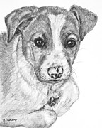 Border Drawings - Border Collie Puppy Drawing by Kate Sumners