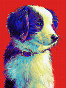 Puppies Digital Art Metal Prints - Border Collie Puppy Metal Print by Jane Schnetlage