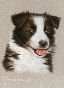 Victor Powell - Border Collie Puppy...