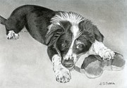 Puppies Drawings Framed Prints - Border Collie Puppy Framed Print by Sarah Batalka
