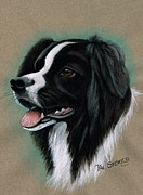 Black Hair Pastels Framed Prints - Border Collie Framed Print by Val Stokes