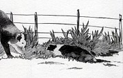 Border Drawings - Border Colllie Dog And Cow by Olde Time  Mercantile