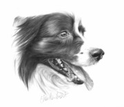 Collie Drawings Posters - Border Grin Poster by Sheona Hamilton-Grant
