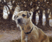 Pencil Paintings - Border Terrier in the woods by John Silver