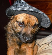 Mans Hat Photos - Border Terrier Stan by Jonathan Steward