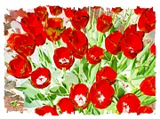Red Tulips Framed Prints - Bordered Red Tulips Framed Print by Will Borden