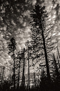 Arkady Kunysz - Boreal forest at dusk