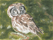 Birds Pastels Prints - Boreal Owl Print by Jymme Golden