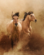 Wild Horses Framed Prints - Born from Dust Framed Print by Ron  McGinnis