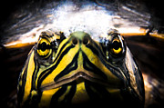 Yellow Slider Posters - Born to be wild Poster by Yevgeni Kacnelson
