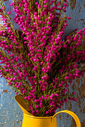 Reds Prints - Boronia in yellow pitcher Print by Garry Gay