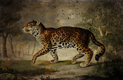 Cheetah Digital Art Framed Prints - Borrowed from the Rose Tree Framed Print by Pamela Phelps