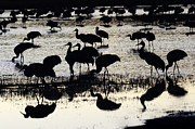 Dreamtime Prints - Bosque Del Apache Into The Dreamtime 2 Print by Bob Christopher