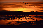 Red Birds In Snow Prints - Bosque Del Apache Sunrise 1 Print by Bob Christopher