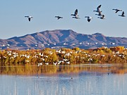 William Wyckoff - Bosque del Apache