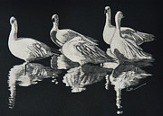 Canadian Geese Paintings - Bosque Reflections by Diane Cutter