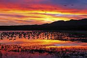 Bosque Sunset II Print by Steven Ralser