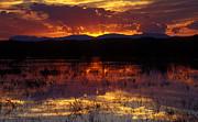 Bosque Sunset - Orange Print by Steven Ralser
