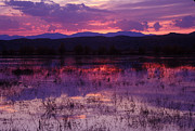 Steven Ralser Posters - Bosque sunset - purple Poster by Steven Ralser