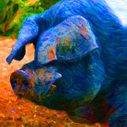 Pig Photo Posters - Boss Hog - 2013-0108 - square Poster by Wingsdomain Art and Photography