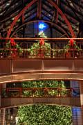 Joann Vitali - Boston Christmas Tree