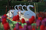 Juergen Roth Art - Boston Public Garden and Swan Boats by Juergen Roth