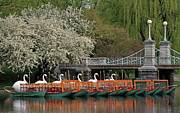 Juergen Roth Art - Boston Swan Boats  by Juergen Roth