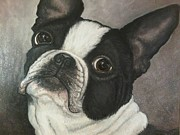 Boston Paintings - Boston Terrier by Ana Marusich-Zanor