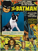 Boston Terrier Art Paintings - Boston Terrier Art - Batman Movie Poster by Sandra Sij