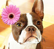 Pink Flower Prints Framed Prints - Boston Terrier Art - The Blushing Bride Framed Print by Sharon Cummings