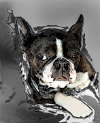 Puppies Digital Art Metal Prints - Boston Terrier.  Channeling Peter Lorre Metal Print by Peter Mix