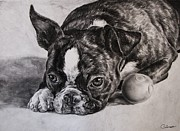 Breeds Originals - Boston Terrier Dog by Cassandra Gallant