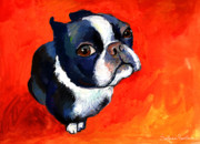 White Terrier Drawings - Boston Terrier dog painting prints by Svetlana Novikova