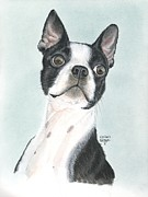 Prairie Dog Pastels Framed Prints - Boston Terrier Framed Print by Heather Gessell