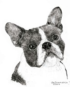 Jim Hubbard Metal Prints - Boston Terrier Metal Print by Jim Hubbard