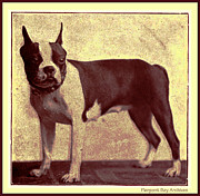 Archives Digital Art - Boston Terrier by Pierpont Bay Archives