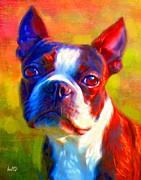 Boston Terrier Portrait Print by Iain McDonald