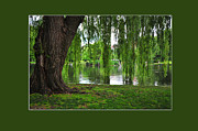 Willow Lake Posters - Boston Tree Poster by Randi Grace Nilsberg