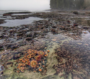 Port Renfrew Prints - Botanical Beach Print by James Wheeler