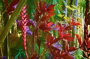 Robert Bissett - Botanical Gardens