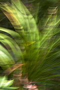 Green Day Digital Art - Botanical Motion Blur by Christina Rollo