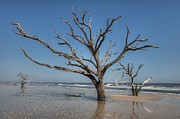 JHR  Photo ART - Botany Bay and Edisto...