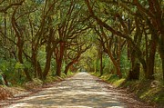 Live Oak Digital Art - Botany Bay Road on Edisto Island by Melanie Snipes