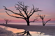 JHR  Photo ART - Botany Bay Trees