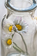 Bottled Metal Prints - Bottled Delight Metal Print by Constance Fein Harding