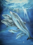 Thomas J Herring - Bottlenose Dolphins